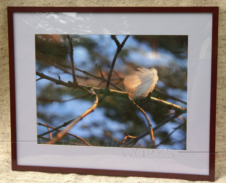 """""""Downy Feather Back-lit in Winter Twilight"""" (matted & framed; finished size 24 x 30""""- for sale)"""
