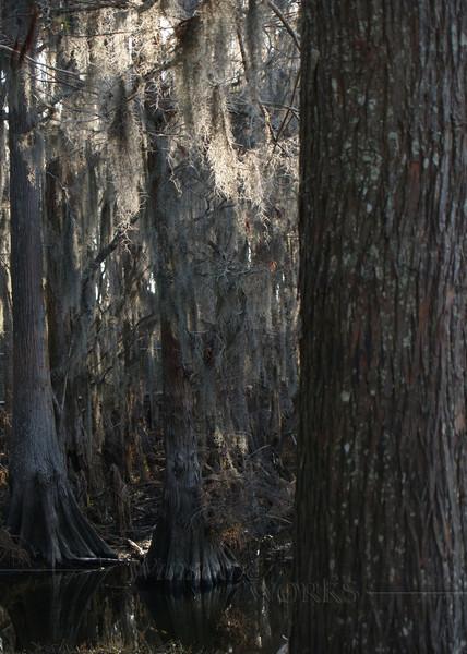 #70- Cypress Swamp, Louisiana