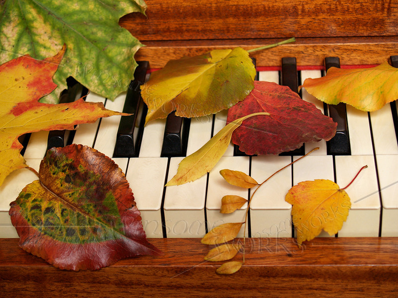 #7 - Autumn Leaves Tickle the Ivories