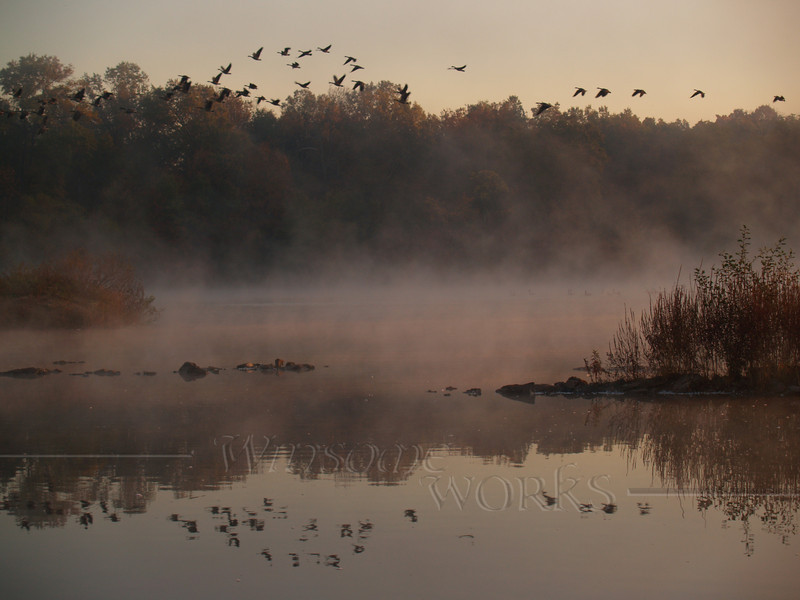#65 - Geese and Mist over Heller Road Pond