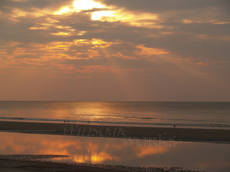 #45 -  Gulls in Sunrise at Hunting Island