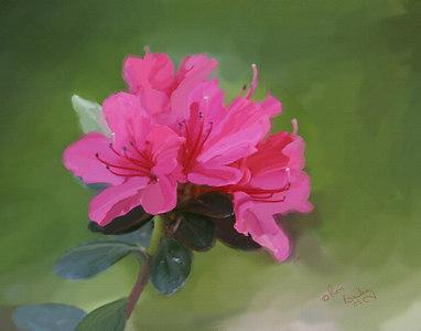 Flower_3592_11x14_canvas