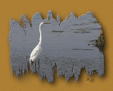 White Egret_2737_24x30
