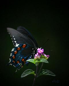 Butterfly_2181_16x20