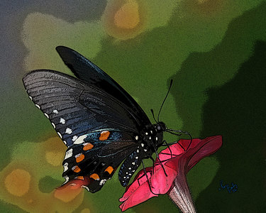 Butterfly_2215_16x20_Posteredge