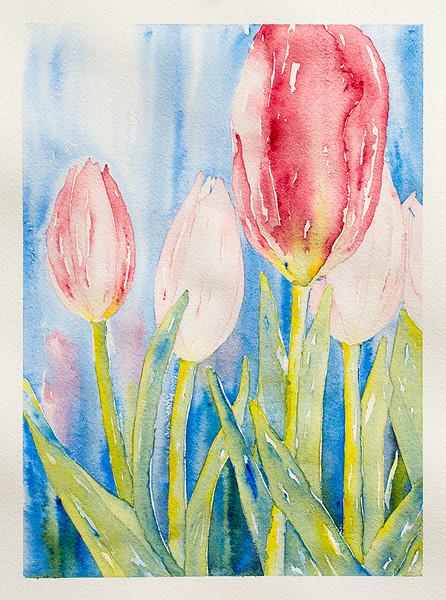 Tulip Field     $50