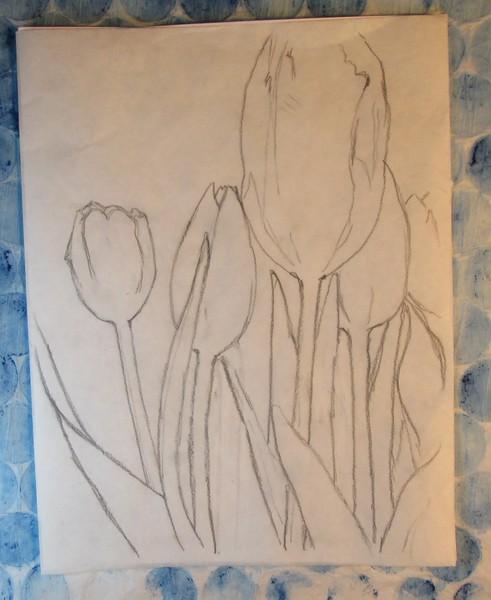 Tulip Sketch