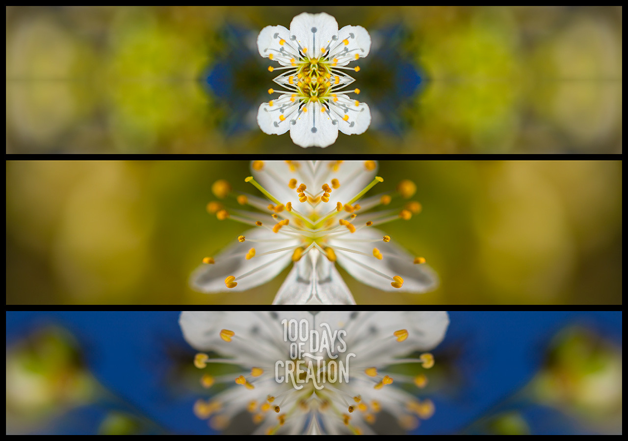 "Day 69 - Triplum ~ Photographic mirrored triptych, 22""x16"""
