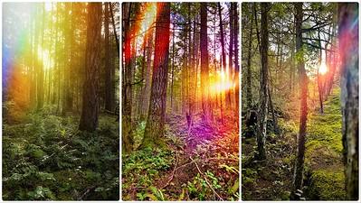 Day 016 - Tree Triptych