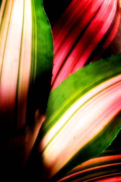 Stripey & colorful