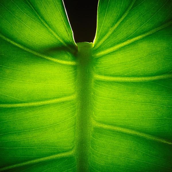 Green Leaf 1