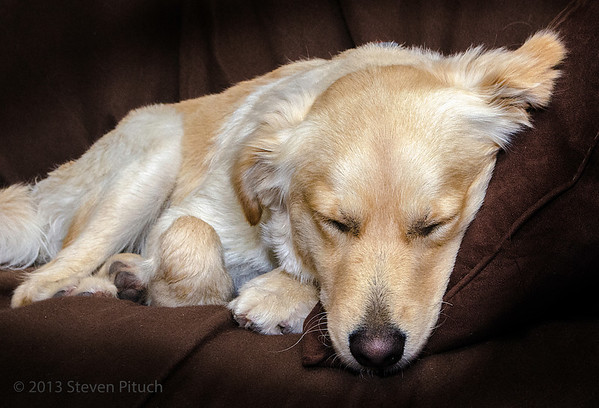 """_DSC7553C 2013/5/19 - TJ -  """"Wet Dog Sleeping on New Leather Couch"""""""