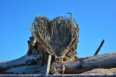 Heart of Roots