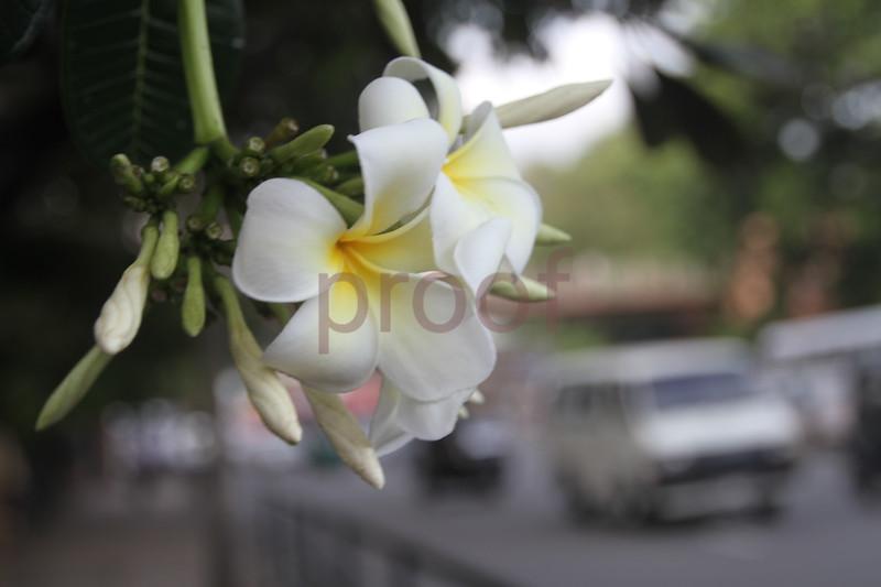 Columbo, Sri Lanka capital