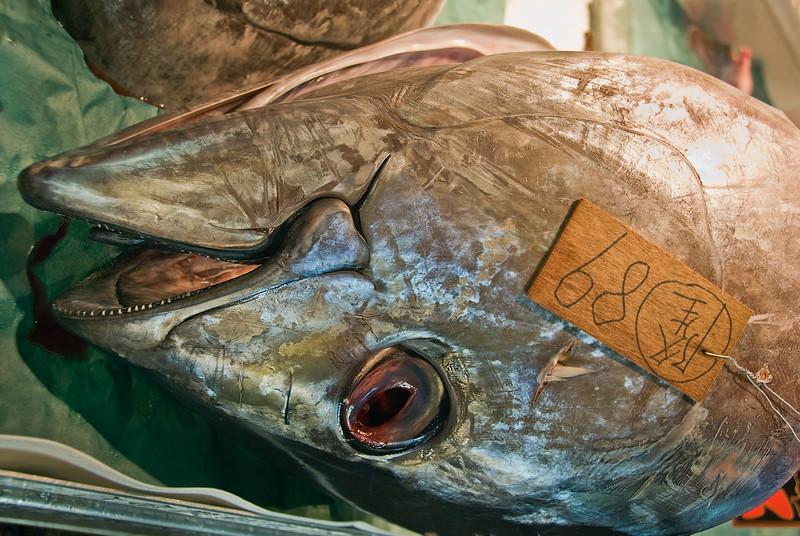 Tokyo, bluefin tuna in Tsukiji central fish market