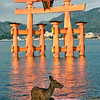 Miyajima, gate at Itsukushima Shrine