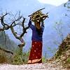 Woman carrying wood, Himalayan foothills, north of Rishikesh