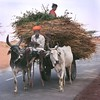 Scene-on-road-to-Jaiselmer-