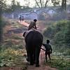 Mudumalai Wildlife Sanctuary, elephant camp, rider and helper