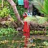 Kerala, backwaters, washing hair