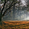 Early morning forest scene, Nagarhole National Park