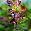 Butterflies, Kerala, Kayaloram butterfly garden