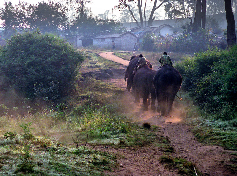 Mudumalai Wildlife Sanctuary, early morning scene at elephant camp
