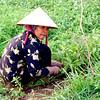 Chau Doc woman in field