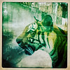 Saigon Zoo
