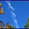 Contrails between Ponderosa PIne and Autumn Aspen.