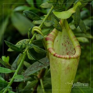 Botanical Garden-16