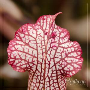 Botanical Garden-10
