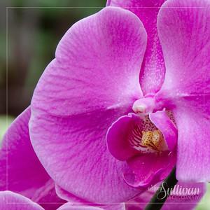 Botanical-1
