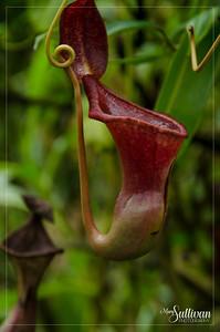 Botanical Garden-15