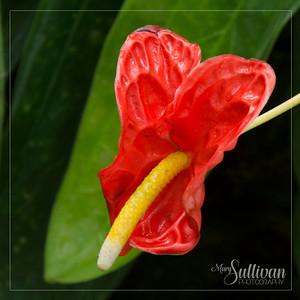 Botanical Garden-17