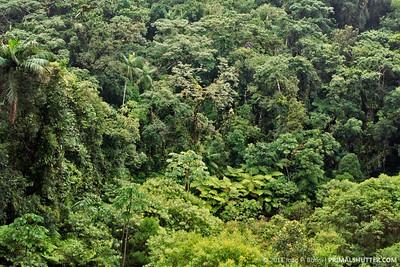 Atlantic forest overlook
