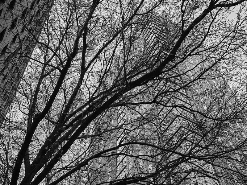 Arboreal Texture - Austin, Texas