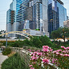 Flowers and Skyscrapers - Austin, Texas