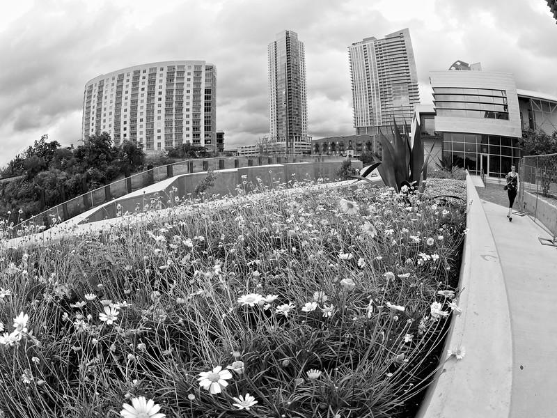 Wildflowers at Seaholm - Austin, Texas