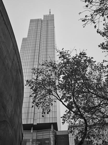 Fairmont and Trees - Austin, Texas