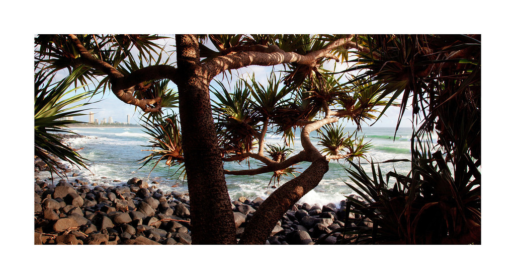 Surfers Paradise - Gold Coast, Australia. View of the city 'Surfers Paradise' from under some Pandanus Palms at Burleigh Heads.