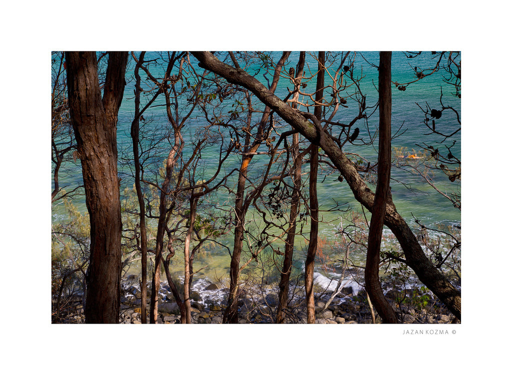 Tea Tree Bay