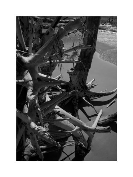 Driftwood II - Great Keppel Island, Australia.
