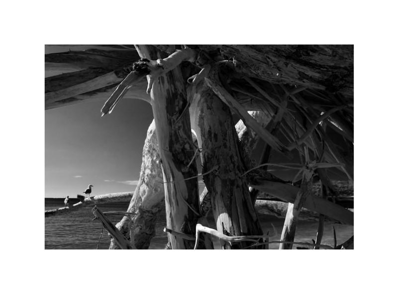 Driftwood I - Great Keppel Island, Australia.