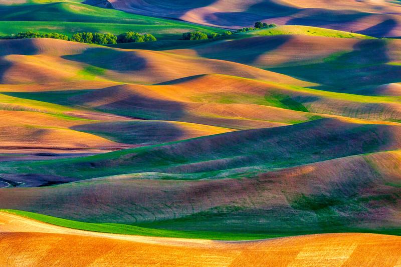 ~Nature's Mosaic~