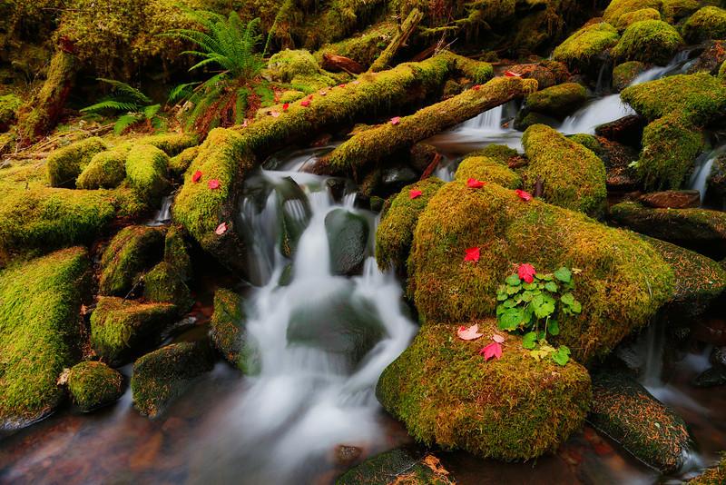 ~Garden of Eden~