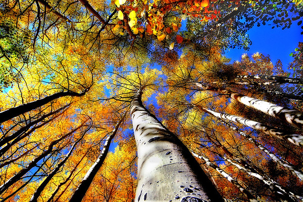 Reach Through The sky*