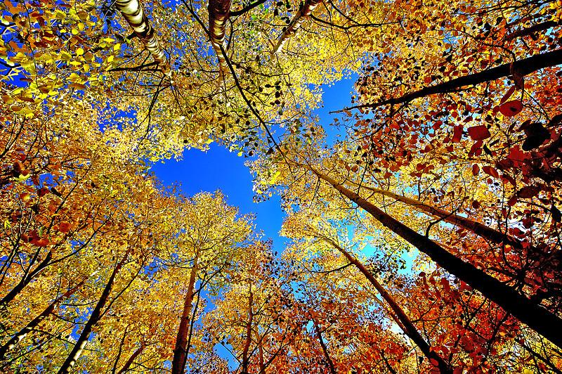 Golden Afternoons     Sierra Nevada Range, California
