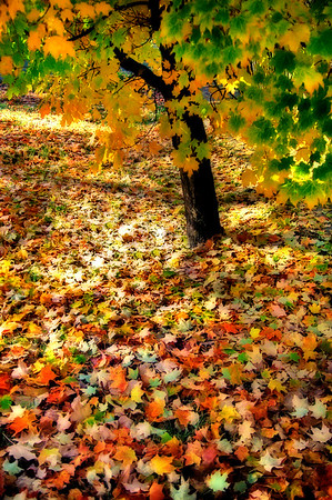 Autumn Carpet*