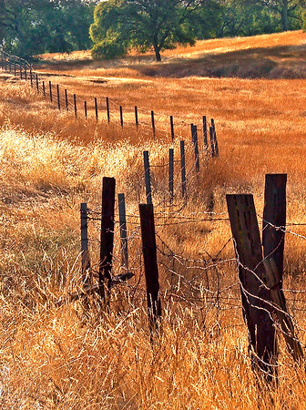 Rustic Divide    Central California